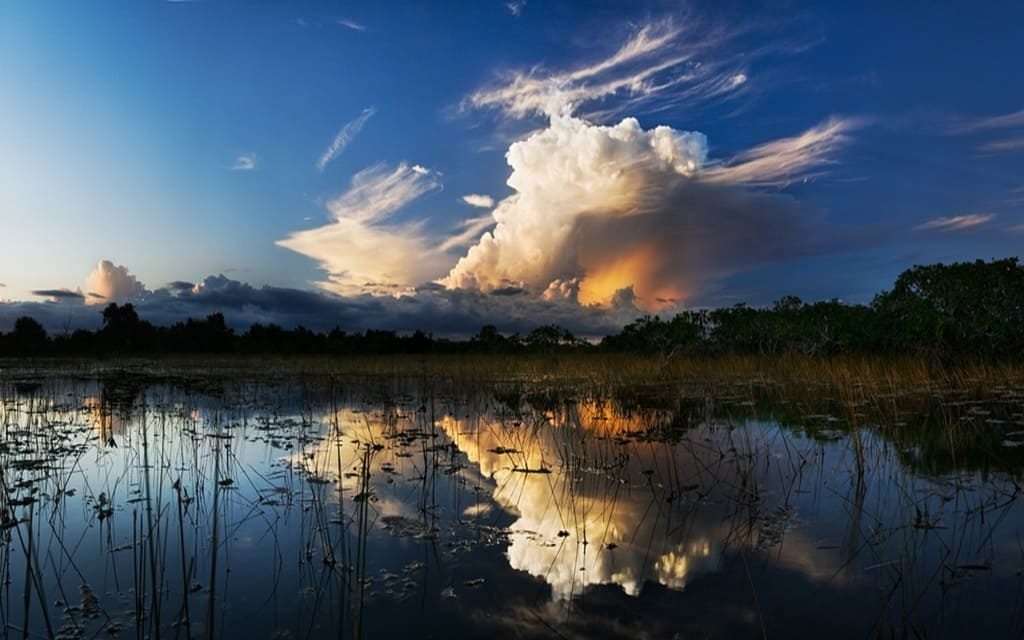 Everglades Nationalpark Natur
