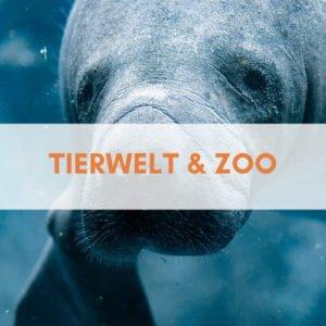 Florida Tierwelt und Zoo