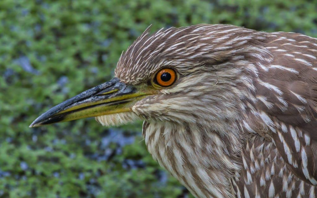 Corkscrew-Swamp-Sanctuary-2