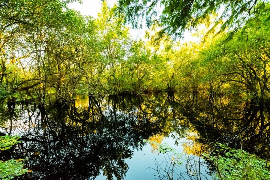 Corkscrew Swamp Sanctuary in Naples Florida