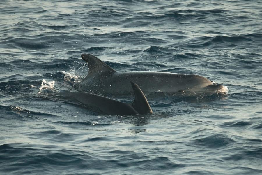 Delfine in Florida