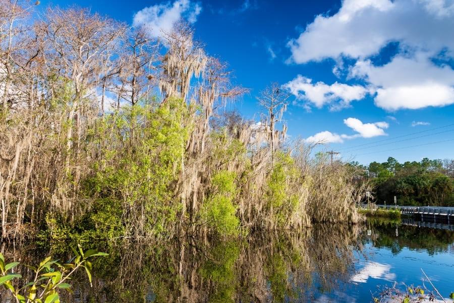 Everglades Nationalpark in Miami Florida