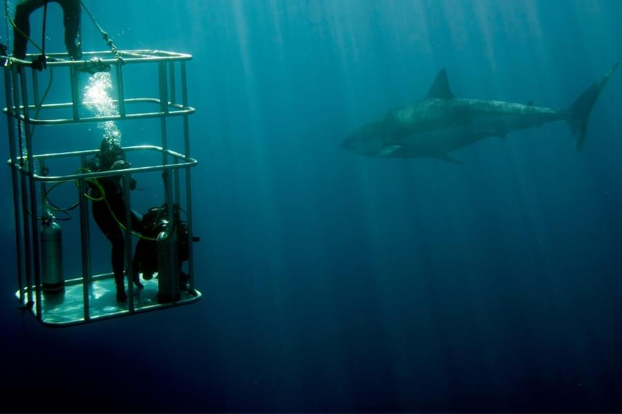 Mit Haien in Florida schwimmen, schnorcheln und beobachten im Käfig unter Wasser