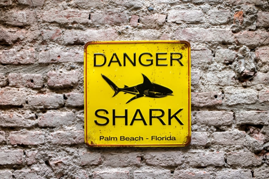 Haiangriffe Florida Palm Beach Miami