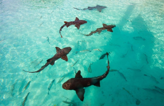 Haie in Florida am Strand