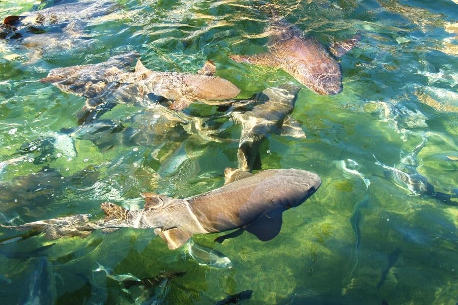 Haie im Zoo Aquarium in Florida anschauen