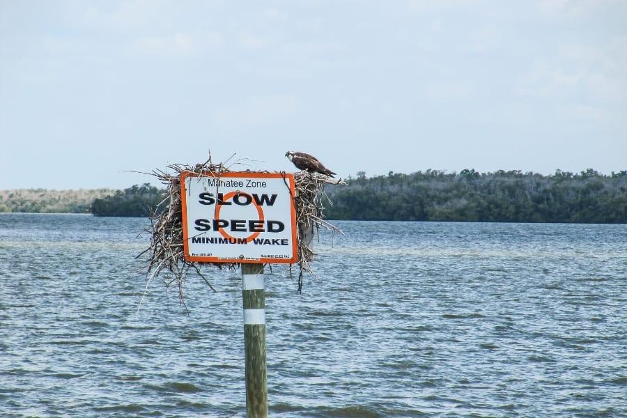 Manatee Schutzzone in Florida
