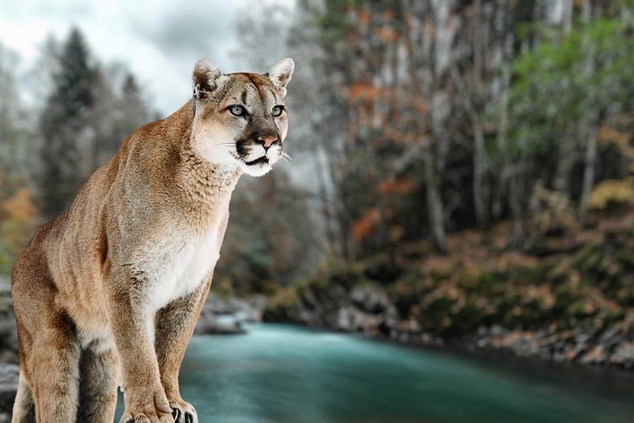 Nationalparks in Florida Panther National Wildlife Refuge Urlaub in Florida
