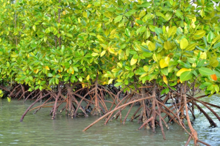 Pflanzen in Florida Urlaub in Florida