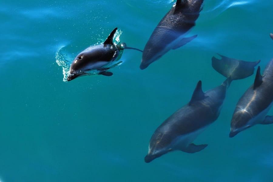 Tiere in Florida Delfine Urlaub in Florida