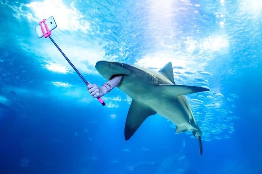 Tiere in Florida Haie Urlaub in Florida