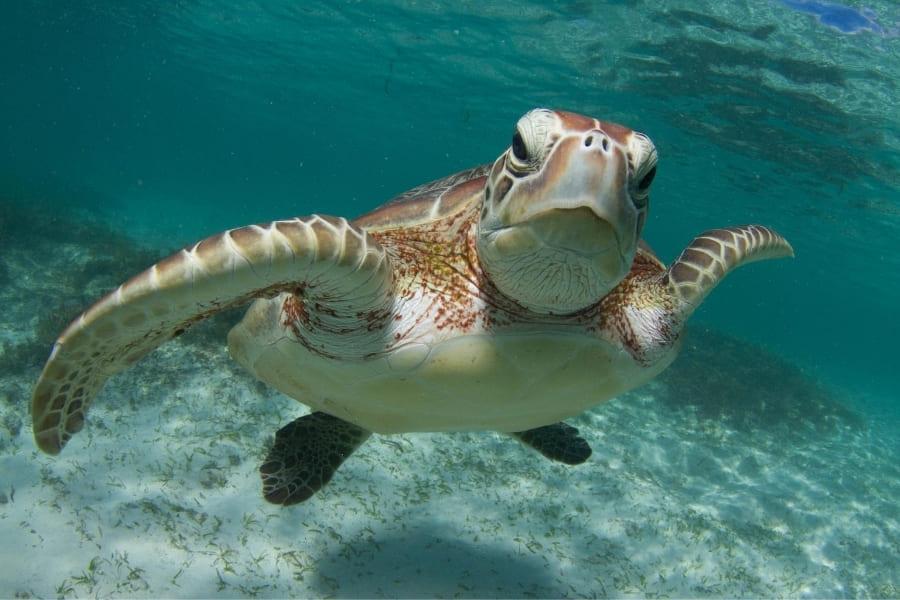 Tiere in Florida Meeresschildkröten Urlaub in Florida