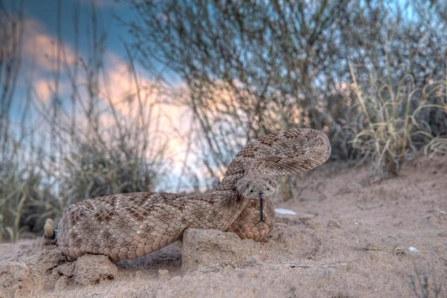 Tiere in Florida Schlangen Urlaub in Florida