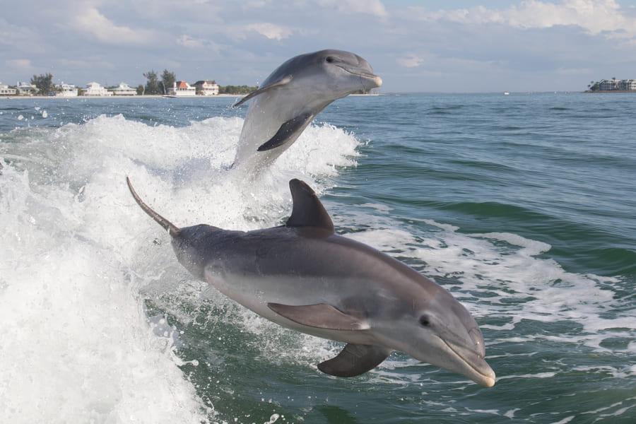 Florida Aquarium Ausflugsziel Dolphin Cruise