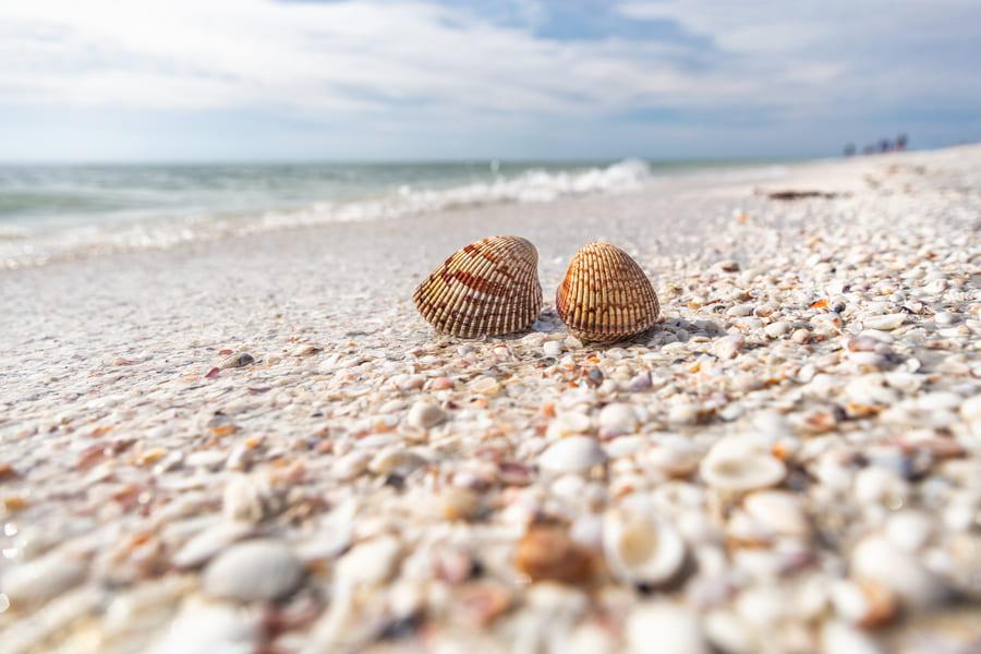 Sanibel Island Beach Florida Muscheln am Strand